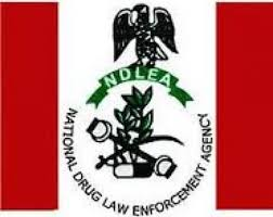 A thorough guide on the National drug law enforcement agency (NDLEA)