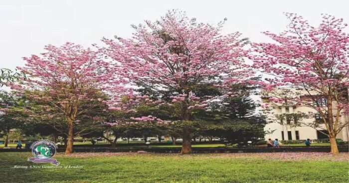 covenant university environment