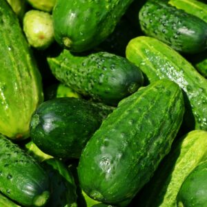 Steps to Cucumber Farming in Nigeria [Challenges, dry season, etc]